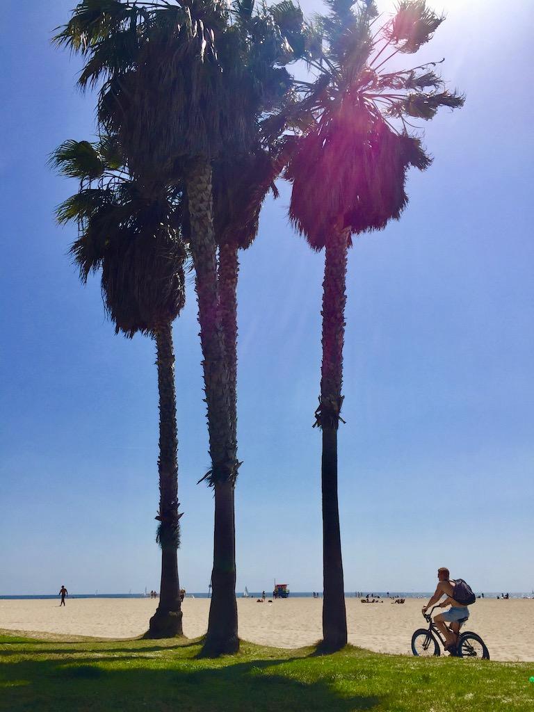 Los Angeles Venice Beach Palms