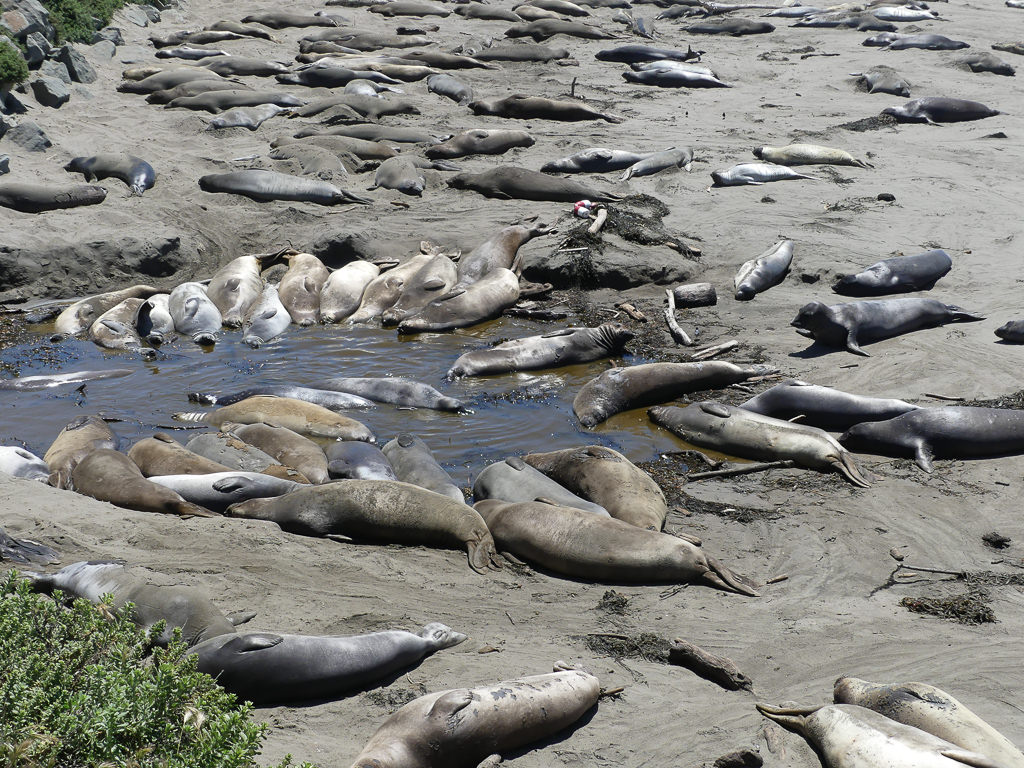 pacific-coast-highway-elephant-seal-rookery-waterhole