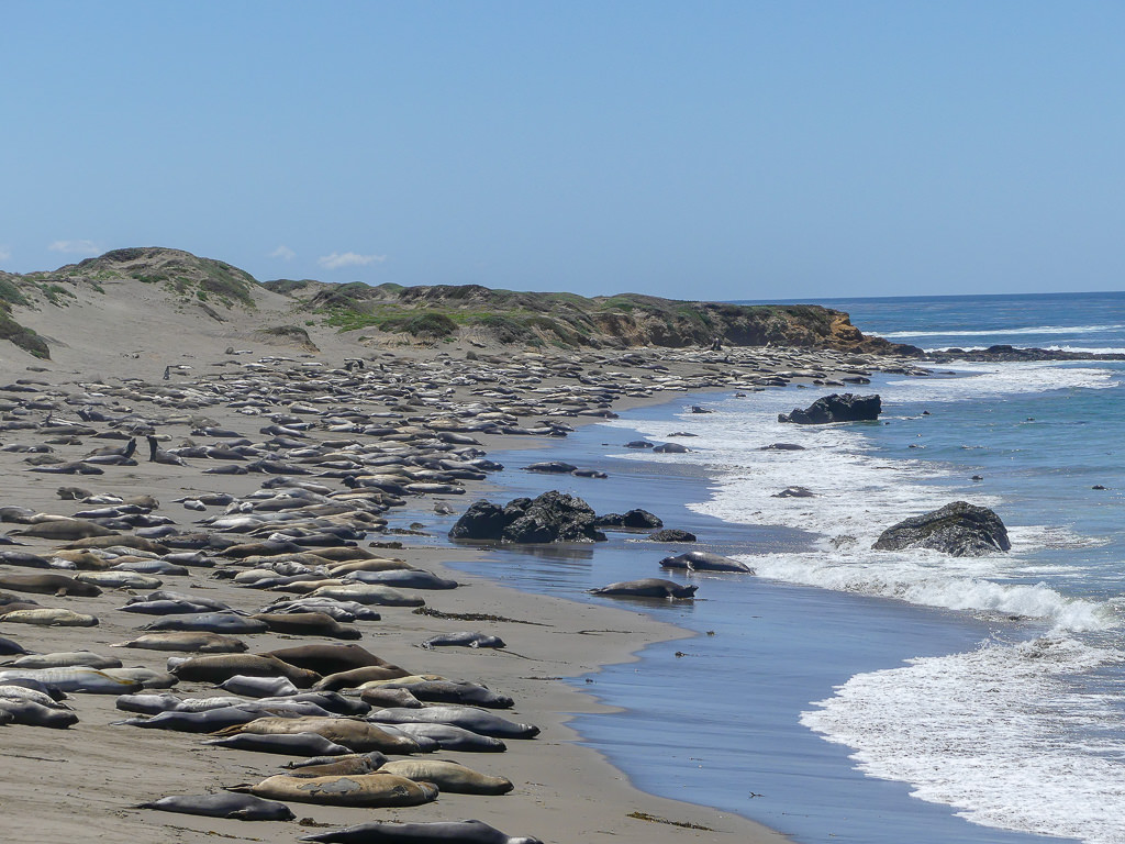 Pacific Coast Highway Elephant Seal Rookery