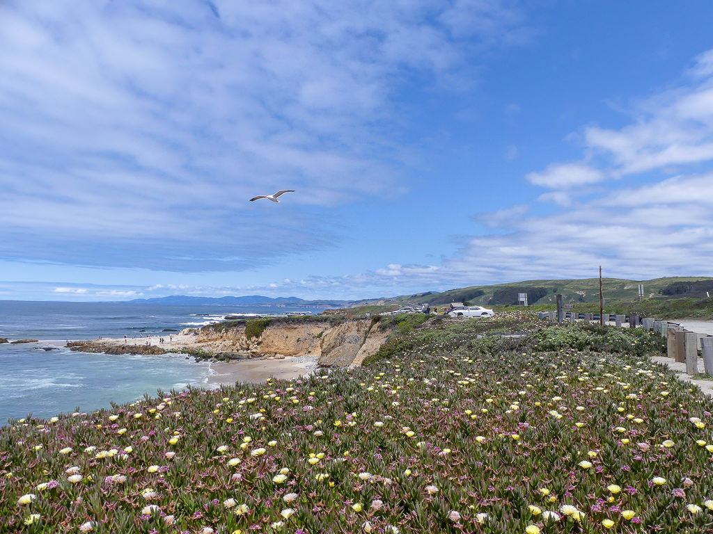 Pacific Coast Highway Monterey Beach Flowers