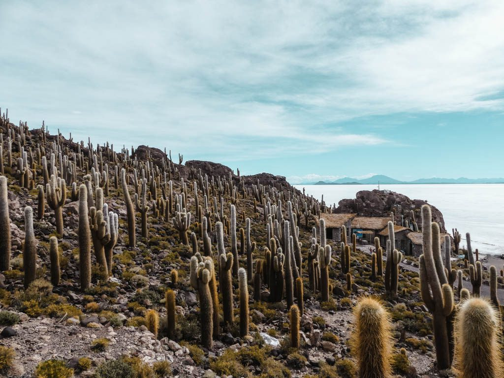 Salar de Uyuni Isla de Incahuasi cactus island overview